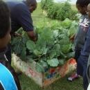 gardens (7)